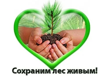 Сохраним лес живым